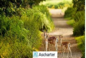 گشت و گذار در بوستان آهوان کیش با خرید بلیط چارتر کیش