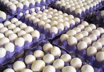 قیمت هر شانه تخم مرغ در اینجا ۱۷ هزار تومان ارزان تر است!