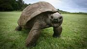 قدرت شگفتانگیز آرواره لاکپشت عظیمالجثه / فیلم