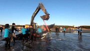 نجات دو نهنگ غولپیکر به گل نشسته در ساحل / فیلم