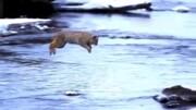 پرش عجیب و باورنکردنی گربه از روی رودخانه / فیلم