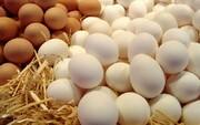 دلایل گرانی دوباره تخم مرغ چیست؟