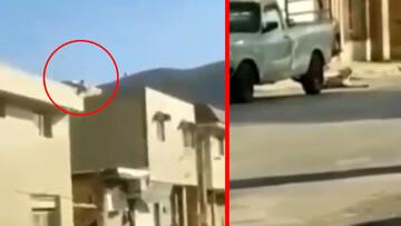 ویدیو دلخراش از وحشیترین سگآزاری در ایران | پرتاب حیوان از بالای ساختمان