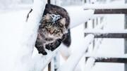 نجات یک گربه یخزده در سرمای روسیه / فیلم