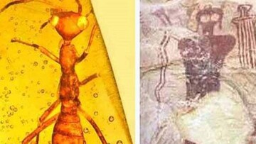 حقایقی جالب و خواندنی درباره مردمان مورچهای که با شنیدن آن شگفتزده میشوید! / تصاویر