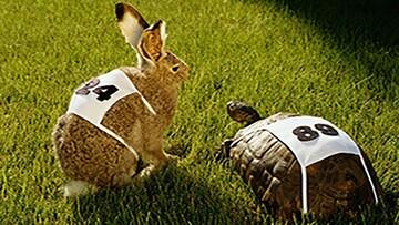 مسابقه جالب خرگوش و لاکپشت با حضور تماشاگران / فیلم