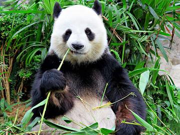 خنگترین حیوانات دنیا را بشناسید / عکس