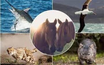 حقایقی جالب و خواندنی درباره سریعترین حیوانات جهان که با شنیدن آن شگفتزده میشوید! / تصاویر