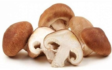 کشف جدید دانشمندان: این نوع قارچ سرطان را درمان میکند / عکس