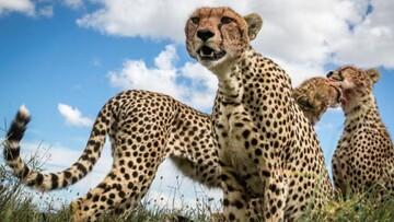 آشنایی با سریعترین حیوانات جهان  / تصاویر