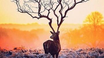 تصاویر حیرتآور از شکار لحظهها در طبیعت!