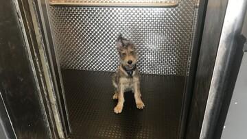 نجات سگ زیبا گرفتار شده در داخل آسانسور / فیلم