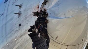 متلاشی شدن پرنده پس از برخورد با هواپیمای مسافربری / فیلم