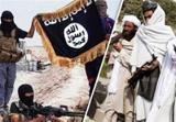 افزایش  درگیریها بین طالبان و داعش