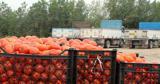 تنها راه مقابله با گرانی میوه عدم صادرات است
