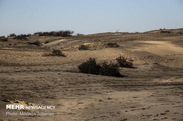 استاندار خوزستان: شرکت نفت  نمی گذارد اراضی چذابه مرطوب سازی شود
