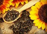 نکته های طب ایرانی-اسلامی/از مصرف ارده - شیره تا یکی از فواید تخمه آفتابگردان