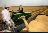میزان تحویل گندم به دولت در سالجاری به 11 میلیون تن نمی رسد