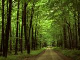 جنگلهای هیرکانی عاقبت به خیر میشوند؟