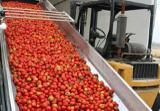 رب تهیه شده از گوجه های سبز ناباروی می آورد!