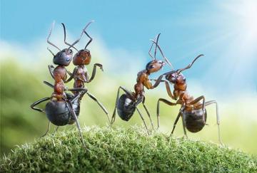 همه چیز راجع به مورچه ها