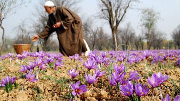 قدرت ایران در بازار طلای سرخ؛ هر روز کمتر از دیروز