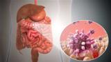 10 راه برای بهبود باکتری روده