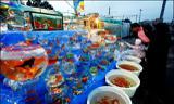 ماهی قرمز عید و خطر کرونا؟