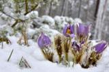طبیعت زیبا و دل انگیز بهاری در نیمکره شمالی زمین/تصاویر