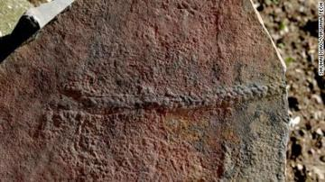 550 میلیون سال قبل و یک موجود زنده