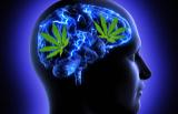 در بدن انسان ماریجوانای طبیعی وجود دارد!