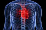 4 تمرین اساسی برای سلامت قلب و عروق