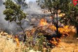 اراضی فیروزکوه در آتش سوخت